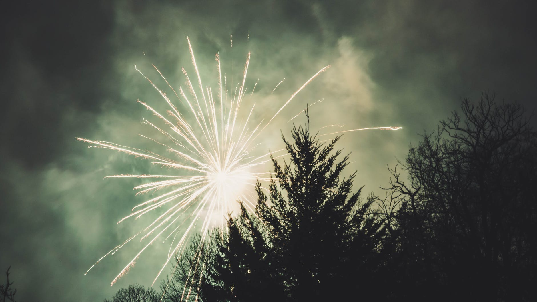 fireworks display above trees